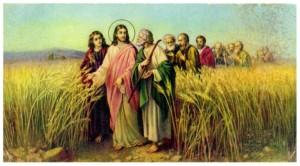 o joio do trigo
